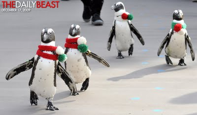 Cape Penguins in scarves